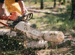 Best chainsaw 2022